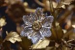 19e s. lustre floral en bronze doré-1