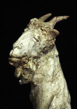 Giuseppe Siccardi (Bergame 1883-1956) - chèvre mère-4